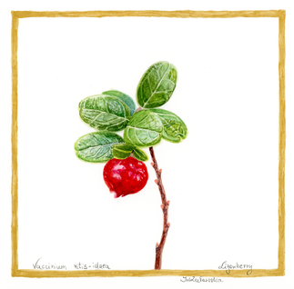 Ligonberry - Forest Red Beads