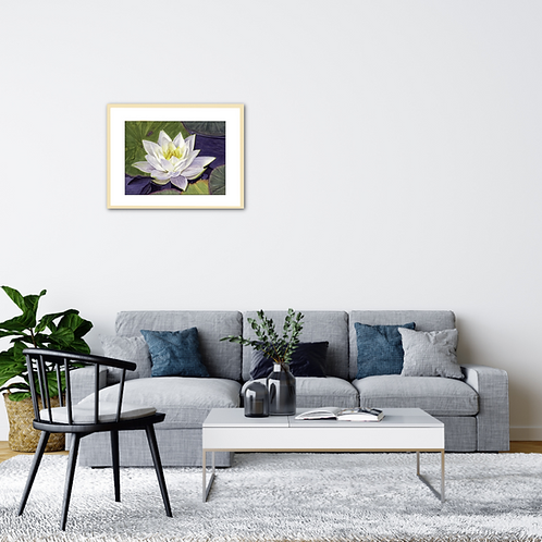 Water Lily – Floating summer cloudby Iwona W. Zulawska