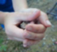 Outdoor, hands, frog, animals