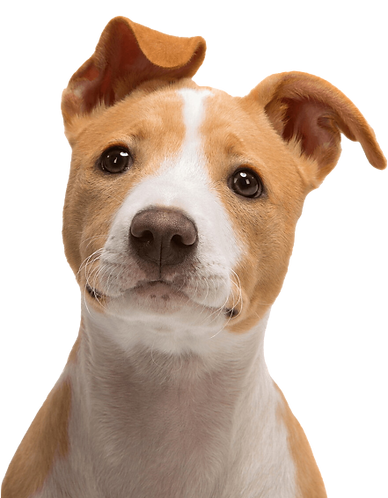 dog_face-removebg-preview.png