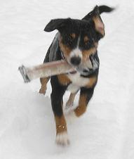 100crpcq_1_Cyra im ersten Schnee 2010 03