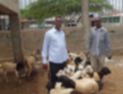 Men with goats