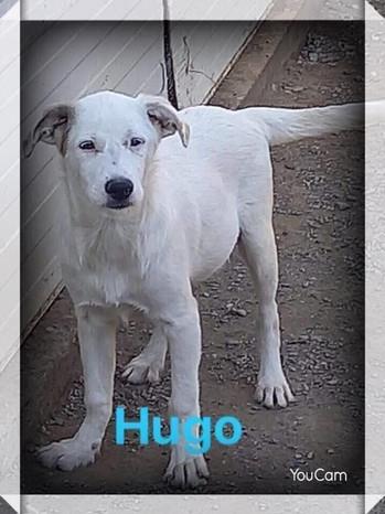 hugo-2.jpg