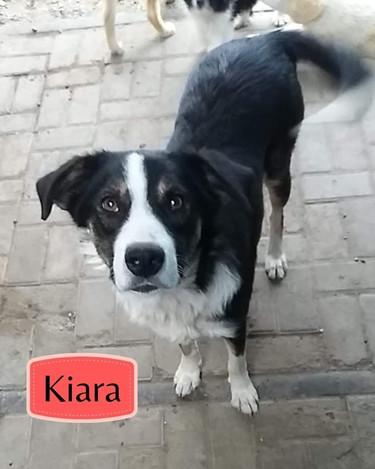 karia-01jpg