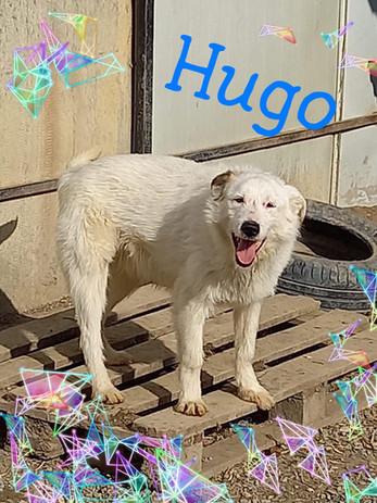 hugo-4.jpg