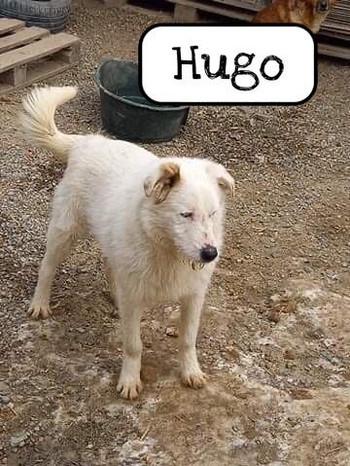hugo-3.jpg