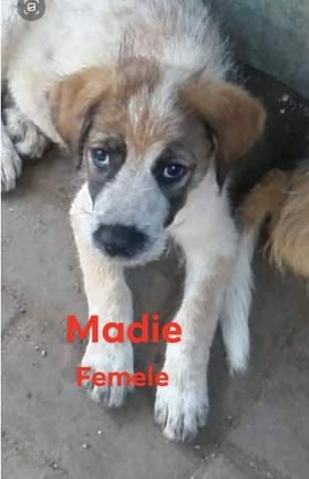 madie-8.jpg