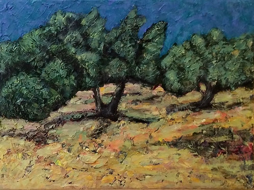 Olive Trees in Galilee #4