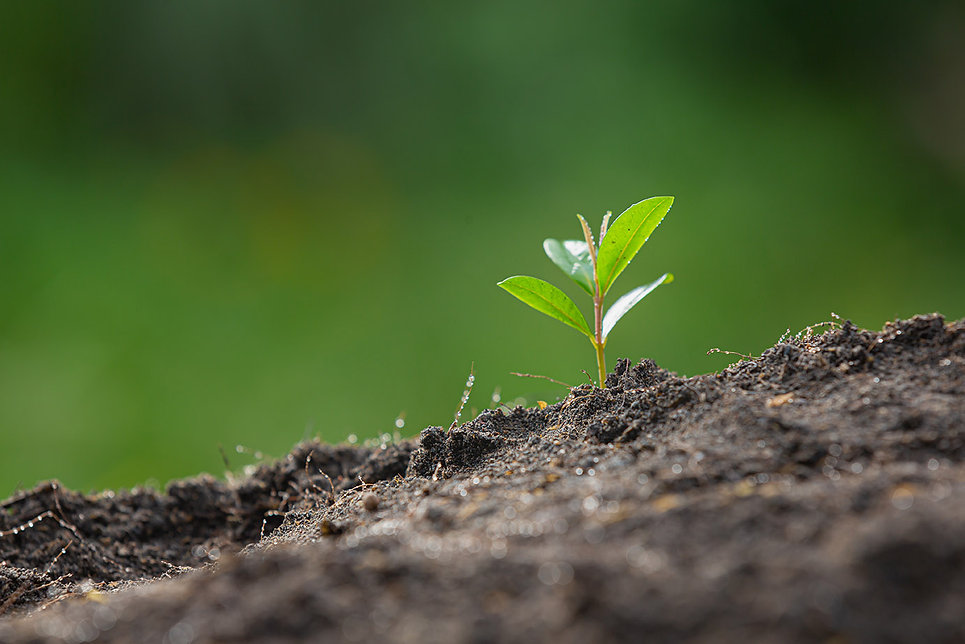 close-up-picture-sapling-plant-is-growing 拷貝.jpg