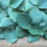 Eucalyptus Wenabalm®