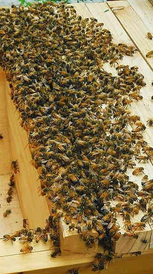 Bees in the system