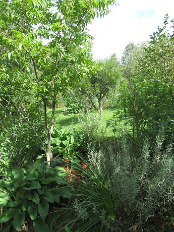 Food forest at Brogo Permaculture Gardens