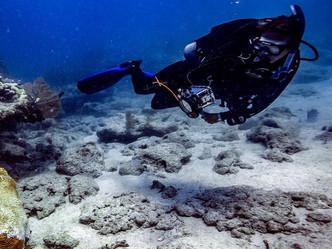 Una nueva amenaza sobre los arrecifes de coral en Puerto Rico