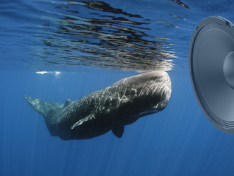 Sea creatures are being drowned out by noise pollution, but for once we're listening