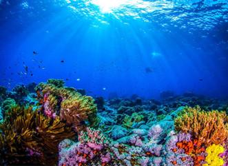 Sombrío futuro para los corales