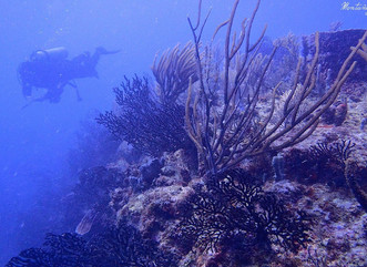 Puerto Rico's Coral Reefs and their importance on the island recovery