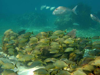 Lack of staffing, funds prevent marine protected areas from realizing full potential