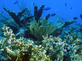 10 Ways You Can Help Protect Caribbean Reefs