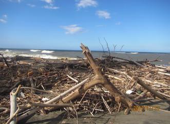 Estudio UPR revela daño significativo en las costas de la Isla tras María
