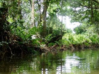DRNA extiende Reserva Natural Caño Boquilla en Mayagüez