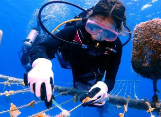 Collaboration is key to rebuilding coral reefs