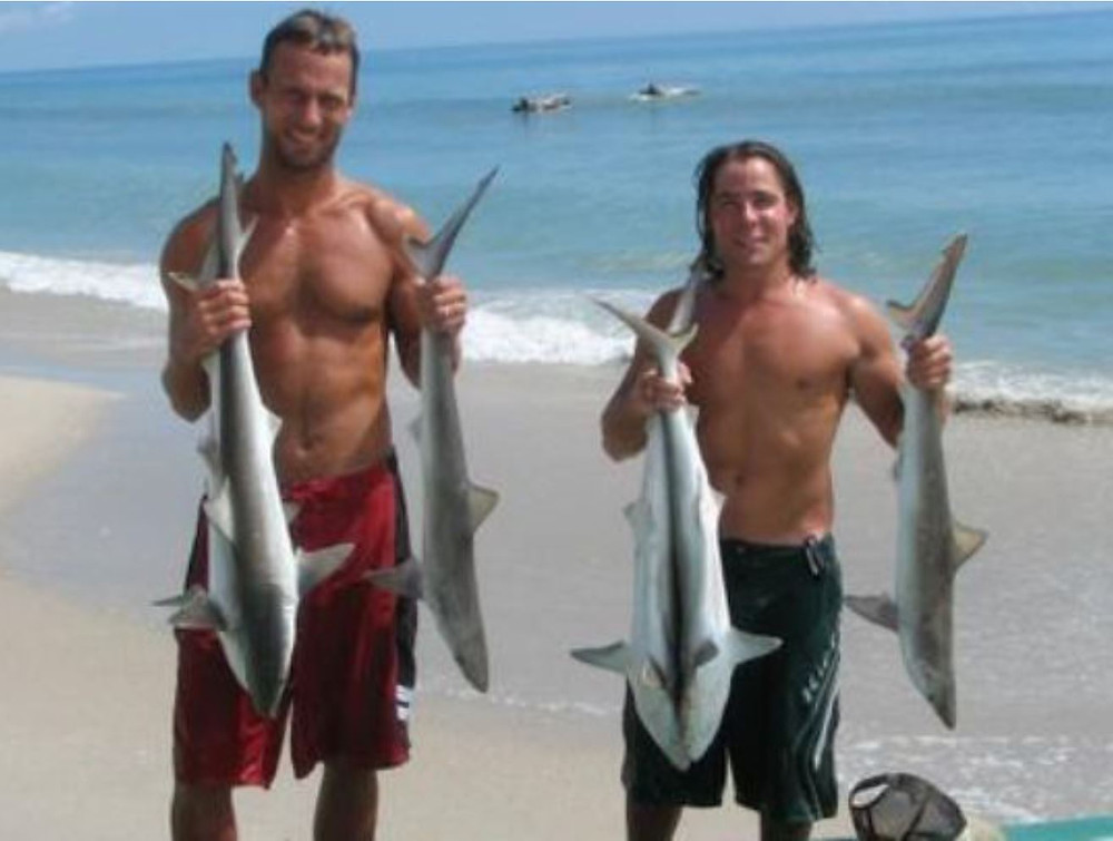 Spinner sharks caught in the Atlantic Ocean off Satellite Beach. (Photo: FLORIDA TODAY files)