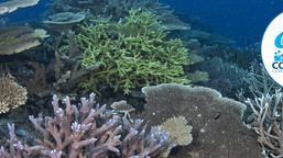 Coral Heroes: The International Coral Reef Initiative