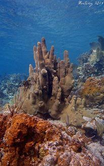 Coral Pilar Histórico