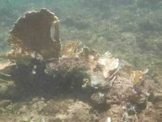 Cámara aprueba proyecto que declara a los arrecifes de coral como estructuras esenciales