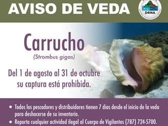Comienza la veda del carrucho en Puerto Rico