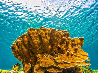How We're Teaching Endangered Coral Reefs to Help Themselves