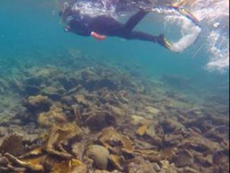 Los arrecifes de coral se recuperan a paso lento