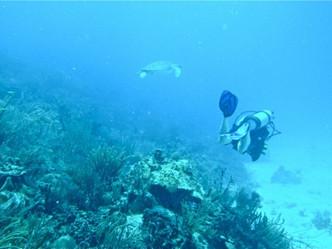Estudian el impacto negativo del 'snorkeling' y el buceo sobre los arrecifes