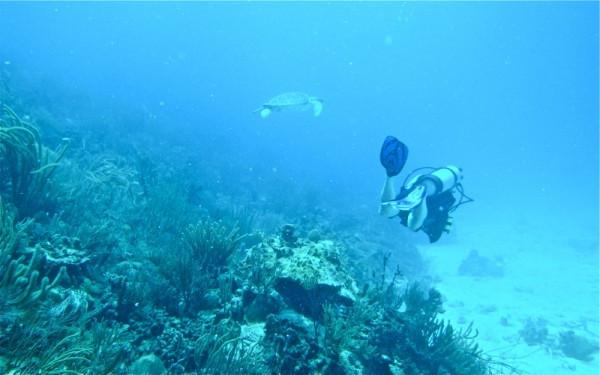 Investigadores del Instituto de Investigación Social y Ambiental realizaron un estudio para medir el impacto negativo que los amantes del 'snorkeling' y el buceo tienen sobre los arrecifes de coral. Foto suministrada por el Instituto de Investigación Social y Ambiental (SERI).