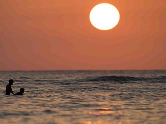 Nuevo estudio revela que el calentamiento global reducirá la fauna marina