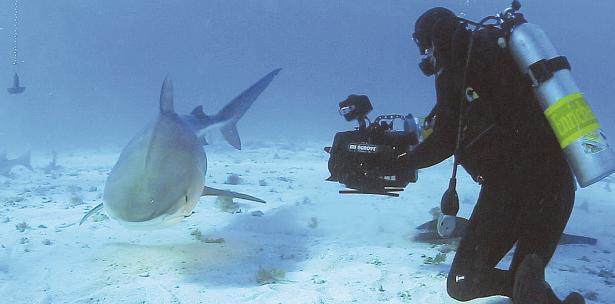 """""""Shark Talk Puerto Rico"""" se presentará el 1 de abril en Fajardo. (SUMINISTRADA)"""