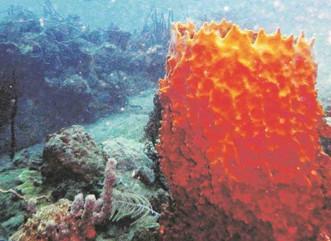 Los arrecifes de coral inyectan $1,411 millones a la economía del país