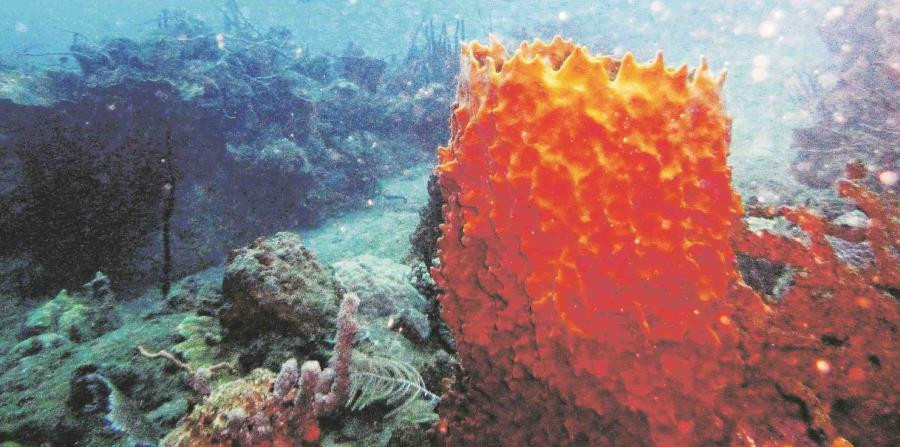 """El estudio """"Puerto Rico Coral Reef Ecosystem Valuation"""" fue subvencionado por la Oficina de Investigación y Desarrollo de la EPA. (GFR Media)"""