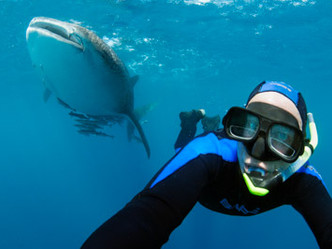 Study uncovers value of shark dive tourism