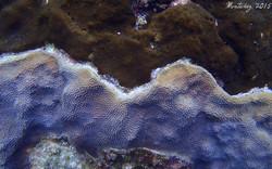 Competencia entre esponja y coral