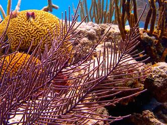 Población cooperativa bajo el mar