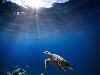 4 Things You Can Do to Save the Ocean