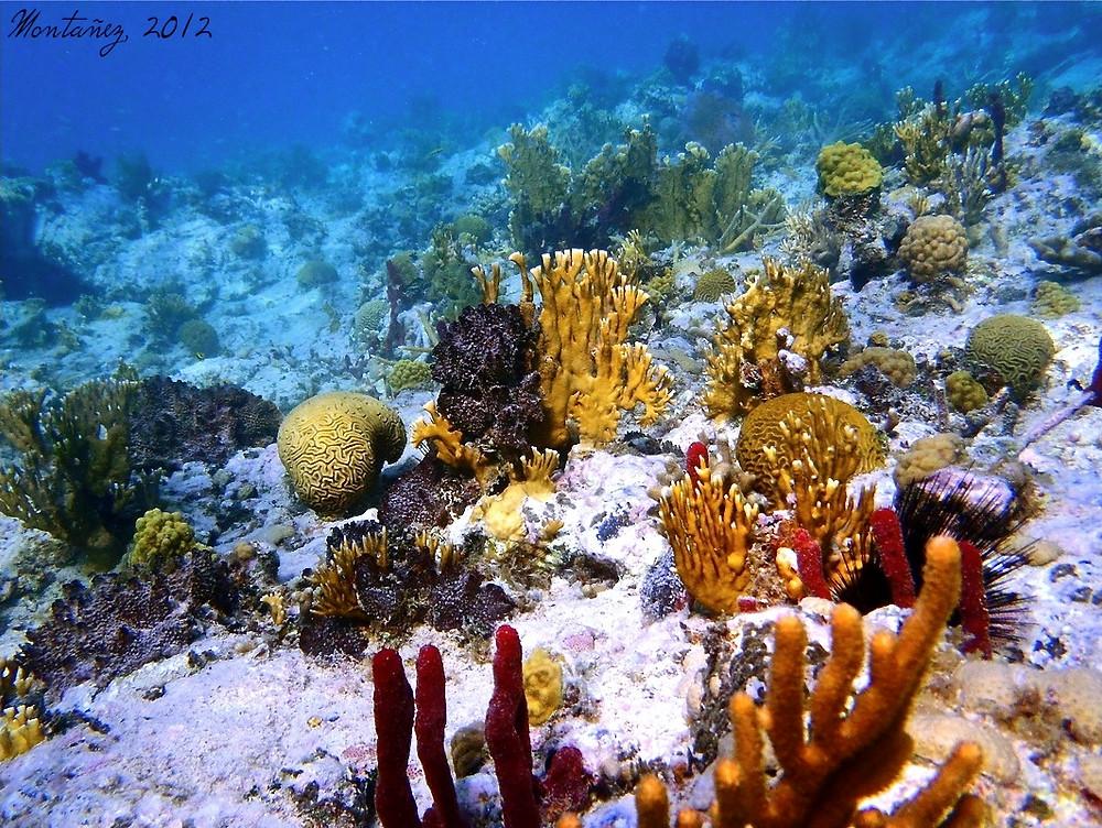 Arrecife de coral de Bahia Tamarindo