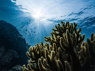 The Current State of Coral Reefs