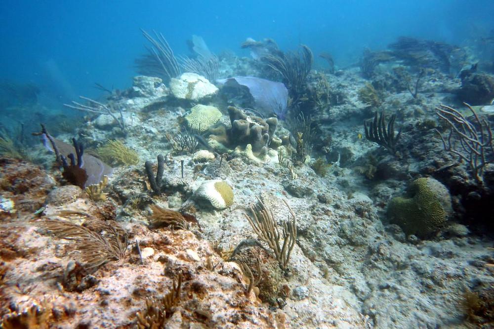 """El """"síndrome blanco"""" se registró por primera vez en la Isla en el Arrecife Punta Tamarindo Chico, en Culebra. Suministrada / Edwin Hernández"""