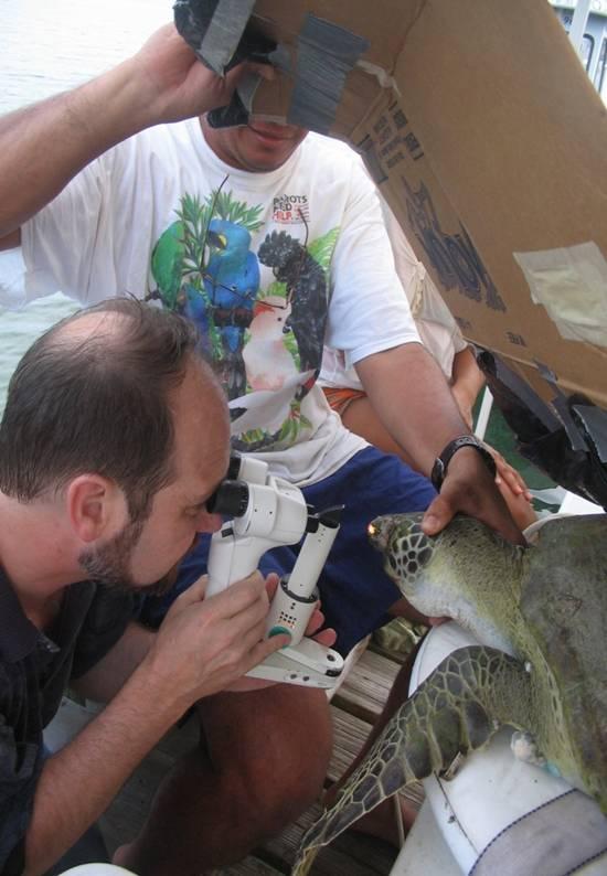 veterinario de UGA examinando ojos