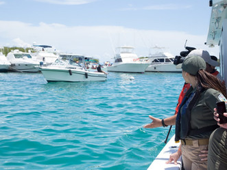 DRNA otorga moratoria temporera de marbetes de embarcaciones