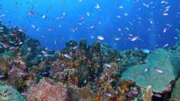Puerto Rico recibe $1.6 millones para restaurar los arrecifes de coral devastados por huracanes