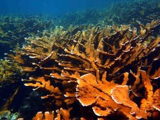Peligra en Puerto Rico el arrecife de coral por el calentamiento y la acción humana