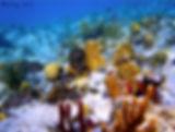 Corales de Culebra